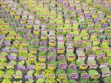 4d67760989d56_o,size,933x0,q,70,h,740859